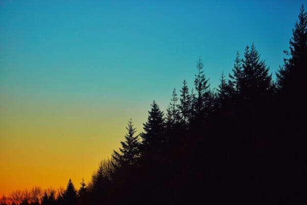 Silhouetted Trees Against a Sunset